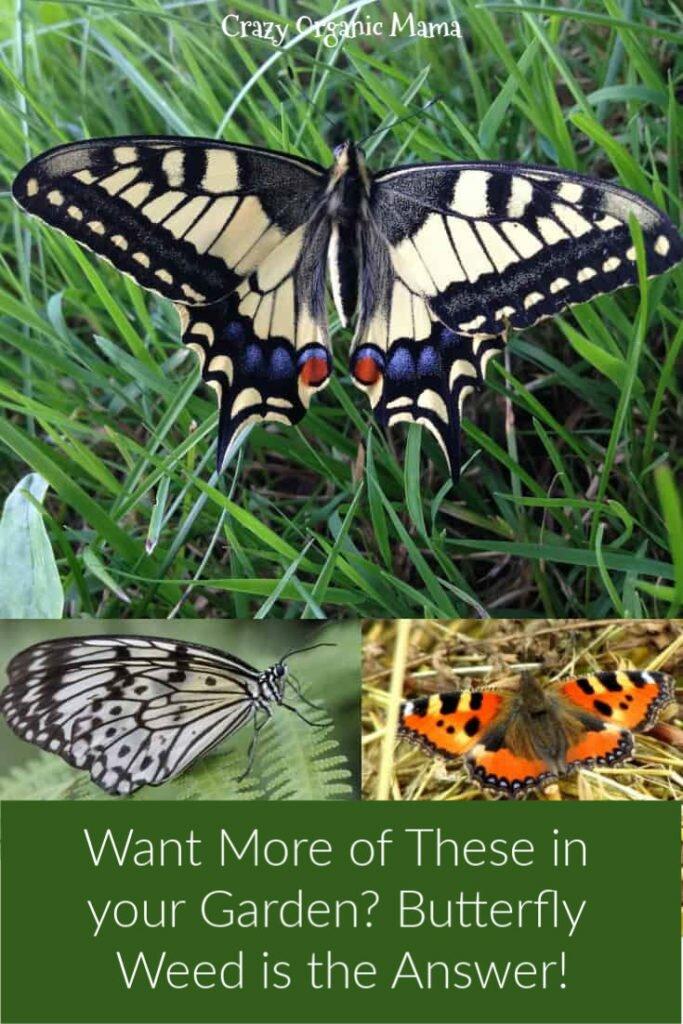 Garden butterflies on nectar plants