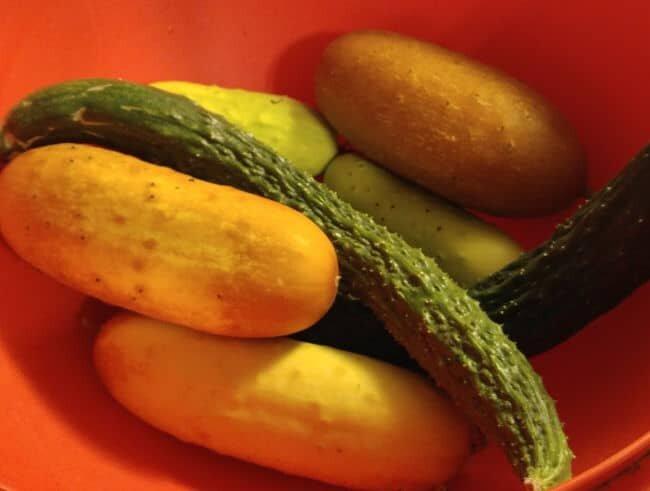 Cucumbers in bowl