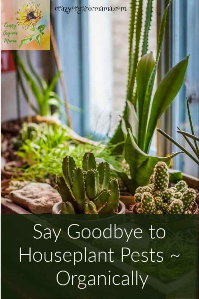 houseplant pest control