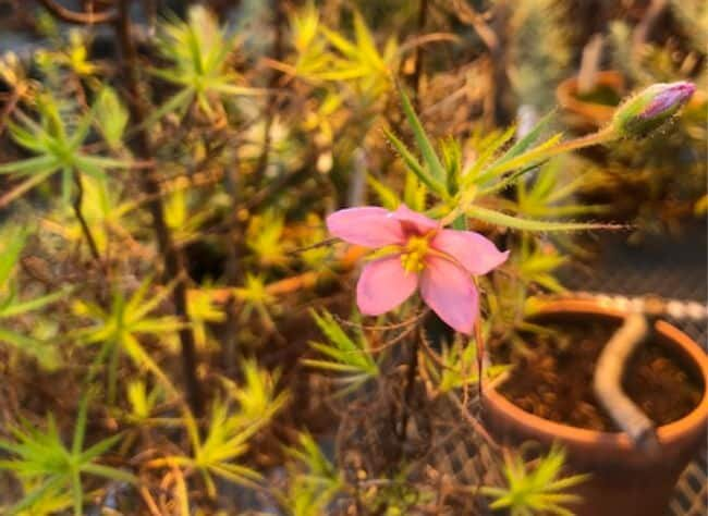 bug plant