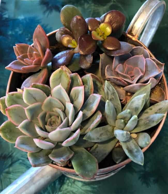full succulent garden