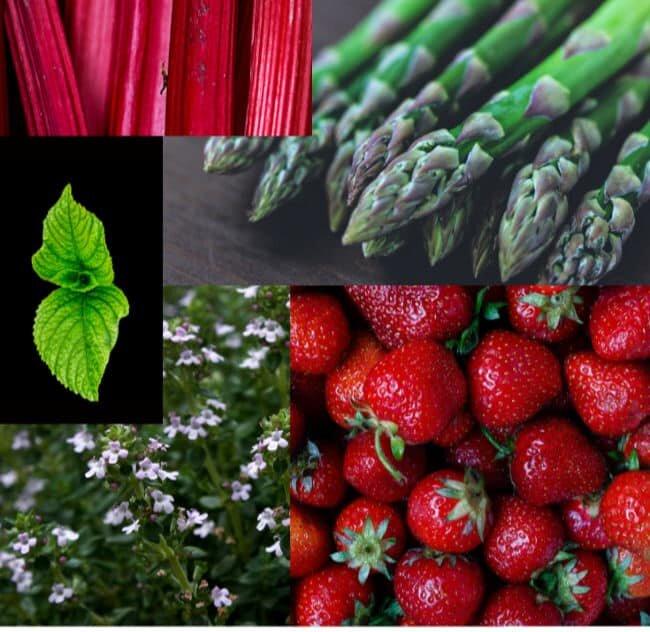 perennial food crops