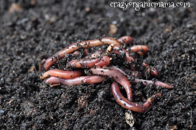 earthworms in healthy soil