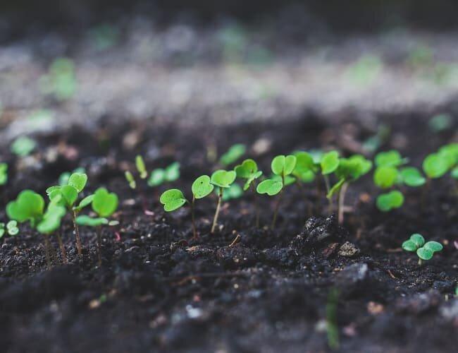 young seedlings