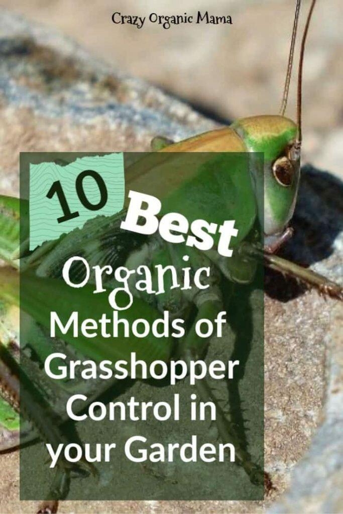 grasshopper pin 2